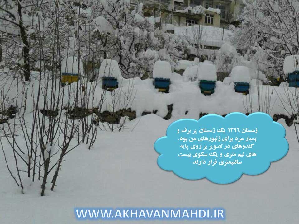 کندوهای کف باز زیر بارش سنگین برف در زمستان
