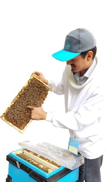 آموزش زنبورداری و پرورش زنبور عسل